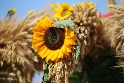 Imprezy kulturalne GOKIS w Kruszynie