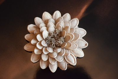 Galeria Kwiaty z nasion