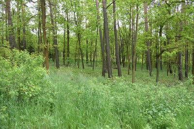 Galeria Wycieczka do lasu